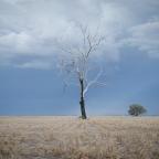 Cos'è il bush australiano?