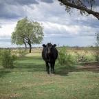 Un esercito silenzioso nel bush australiano